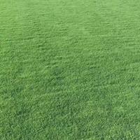 优质马尼拉草皮,草坪,草块2019年*新报价3元