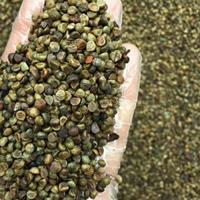 爬山虎種子低價出售,江西五葉爬山虎種子常青綠色爬藤植物