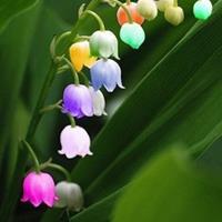 风铃草、铃兰、铃铛花怎么区别