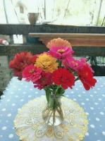 百日草,又叫百日菊,做切花也很美