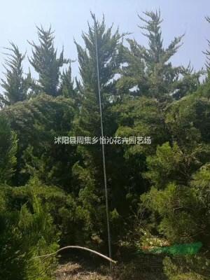沭阳县周集乡怡沁花卉园艺场