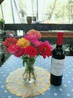 供應百日草種子,紅酒和百日草插花,更配哦!