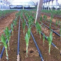 百合花海专业构建找江苏绿康态种业有限公司