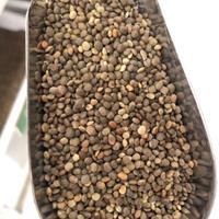江西柴桑区盐肤木种子批发护坡种子灌木种子
