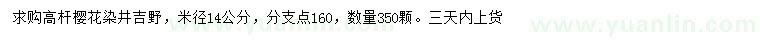 葡京米径14公分染井吉野樱