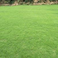 南康草皮草卷马尼拉草坪