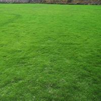 优质特价马尼拉草坪草卷