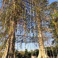 廣州廣大花木基地低價供應進口紫薇一米到兩米直徑