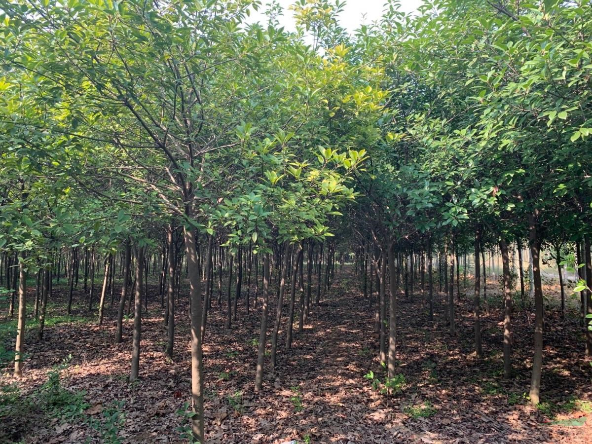安徽绿园生态科技有限公司