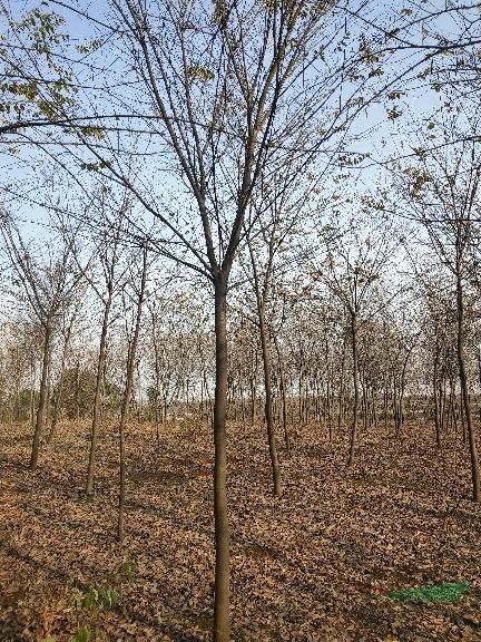 全椒朴缘园林景观有限公司