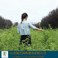 大量出售蔷薇、蔷薇图片、蔷薇价格、蔷薇种植基地
