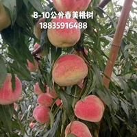 大量出售6公分毛桃树_7公分毛桃树价格_毛桃树培育基地
