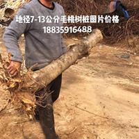 毛桃树批发·粗度6公分7公分9公分毛桃树产地批发价格