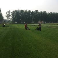 馬尼拉草坪價格_馬尼拉草坪產地_馬尼拉草坪草皮苗圃基地