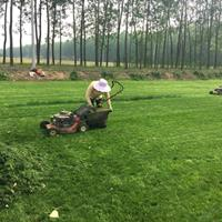 狗牙根草坪价格_狗牙根草坪产地_狗牙根草坪草皮苗圃基地