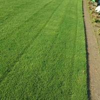 百慕大草坪、马尼拉草坪、台湾青草坪、四季青等各种草坪