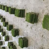 草皮价格,郴州草皮价格,郴州马尼拉草皮新价格多少?
