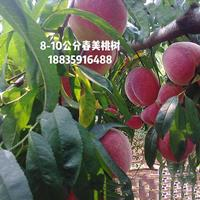运城哪里有桃树?哪里有出售大红春蜜桃树的?