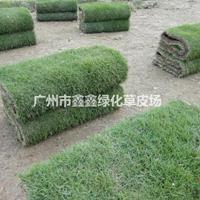 广州马尼拉草4.5元每平方