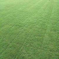 优质特价安徽马尼拉草坪产地直销