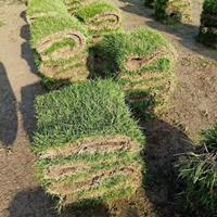 湖南供应滁州马尼拉草皮规格齐全