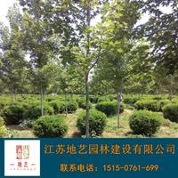 瓜子黄杨球基地、瓜子黄杨球产地、江苏地艺园林瓜子黄杨球