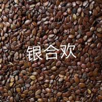 江西林木种子银合欢种子价格 九江新银合欢种子价格便宜 九江新