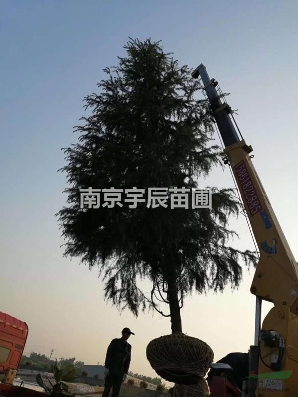 南京宇辰苗圃