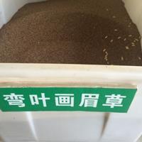 江苏常年供应弯叶画眉草种子 低价批发