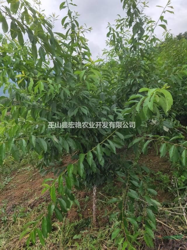 巫山县宏艳农业开发有限公司