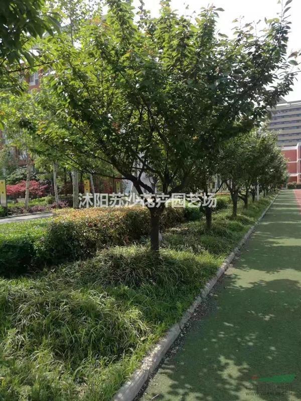 沭阳苏沙花卉园艺场
