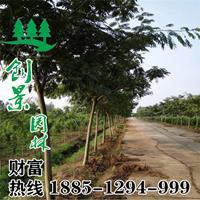 【合歡樹】合歡樹_報價表_圖片_產地行情-行道樹