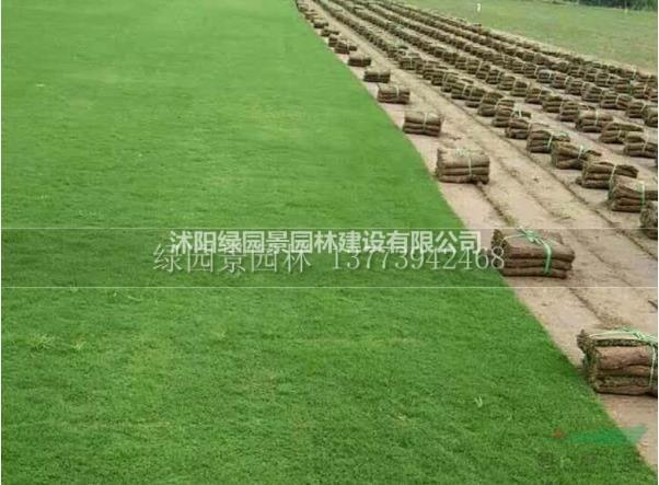 哪里狗牙根、三葉草、中華結縷草、馬尼拉價格便宜