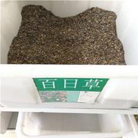 供應百日草種子大量批發自產自銷