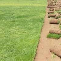 帶泥土真草皮馬尼拉四季青果嶺草坪庭院綠化植物
