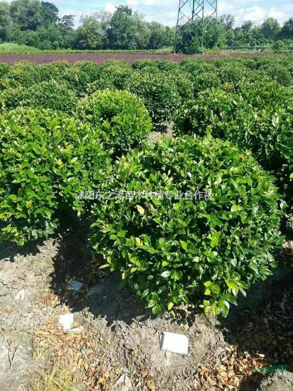 沭阳东之泽苗木种植专业合作社