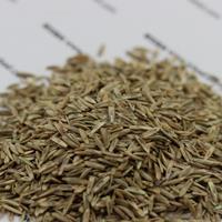 一年生黑麦草能过冬吗?