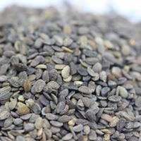福祿考種子多少錢一斤?