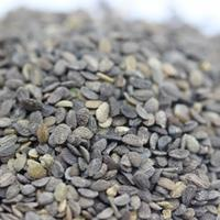 福祿考種子批發價格