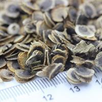 蜀葵種子價格,蜀葵種子哪里有賣?