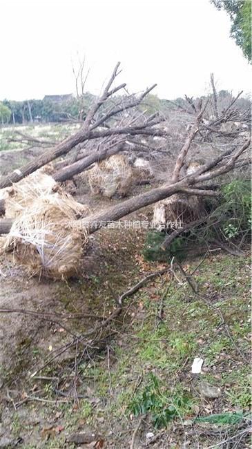 沭阳县卉友苗木种植专业合作社