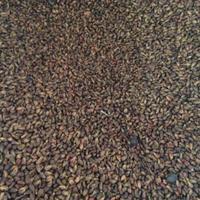 葡萄種子批發?多少錢一斤?