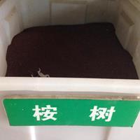 江苏桉树种子价格?桉树种子多少钱一斤?