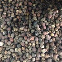 今年檀香树种子卖多少钱一斤?