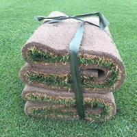 基地直销:剪股颖、马尼拉、高羊茅、中华结缕草、早熟禾、混播草