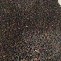 日本厚朴种子多少钱一斤?日本厚朴种子哪里批发便宜