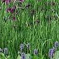 低價苦草、聚草、伊樂藻、狐尾藻等水生植物、沉水植物
