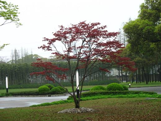 邵武万春园林绿化有限公司