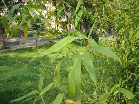 中国竹乡-安吉绿竹园艺