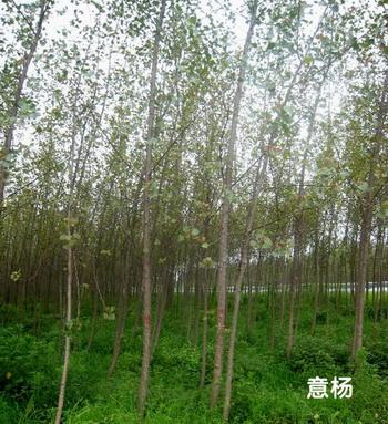 扬州高松生态园林建设有限公司